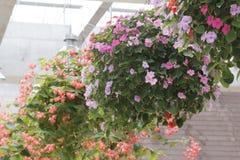 Closeupfoto av att hänga härliga blomma blommor arkivbilder