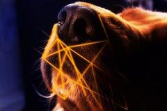 Closeupfoto av textur på en dog& x27; s-näsa med ljusa linjer abstra Royaltyfri Bild