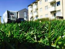 Closeupgräs, oskarp bakgrund! fotografering för bildbyråer