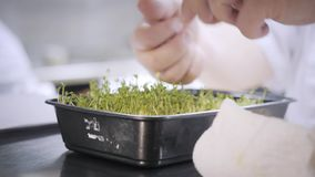 Closeupgräsplangroddar på tabellen Gruppkockar som är upptagna i kommersiellt kök av restaurangen Personal i en restaurang eller  lager videofilmer