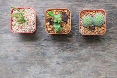Closeupgrupp av kaktuns i plast- vit- och bruntkruka på wood skrivbord texturerad bakgrund i bästa sikt med kopieringsutrymme Fotografering för Bildbyråer
