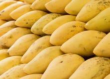 Closeupgrupp av mango Arkivbild