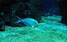 Closeuphavsfisk som isoleras på naturbakgrund Arkivbilder