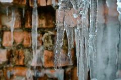 Closeupistappar, abstrakt gammal bakgrund för tegelstenvägg med sprickais, mossa och filialer av buskar, istappar, isför mycket p Royaltyfri Fotografi