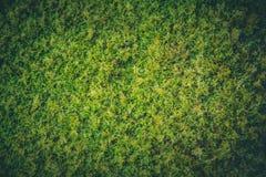 Closeupjordmossagräs i vått fuktigt för rainforest royaltyfri fotografi