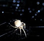 closeupkors dess spindelrengöringsduk Arkivfoton