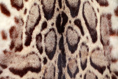 Closeupleopardhår för bakgrund Arkivfoto