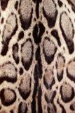 Closeupleopardhår för bakgrund Royaltyfri Foto