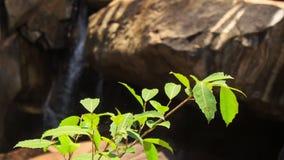 Closeupljus - gröna Bush sidor vaggar vattenfallet lager videofilmer