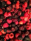 Closeupmakro av björnbär och hallon organisk 100% Royaltyfri Bild