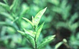 Closeupnatursikt av det gröna bladet Arkivfoto