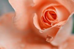 closeuppinken steg Fotografering för Bildbyråer
