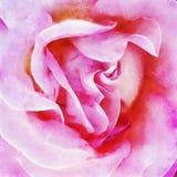 Closeuprosa färger Rose Fine Art vektor illustrationer