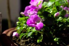 Closeups plant. Bokeh flower shots closeups garden royalty free stock photography