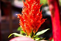 Closeups plant macro shots. Bokeh flower shots closeups garden stock photo