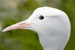 Closeupsikt av blåttkranen Fotografering för Bildbyråer