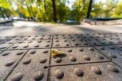 Closeupsikten av den konkreta modellen parkerar in i Sunny Autumn Day With Golden Leaves i träd, Lettland, Europa, begrepp av att arkivfoton