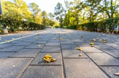 Closeupsikten av den konkreta modellen parkerar in i Sunny Autumn Day With Golden Leaves i träd, Lettland, Europa, begrepp av att arkivbild