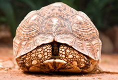 closeupsköldpadda royaltyfri bild