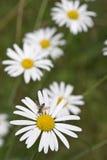 Closeupskott av blommor arkivfoto