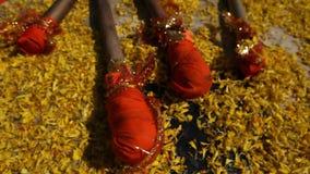 Closeupskott av blommor i tempel stock video