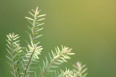 Closeupskott av för envisare för barn som grön lövverk för blad skjuter upp i luft med suddighetsgräsplanbakgrund arkivfoton