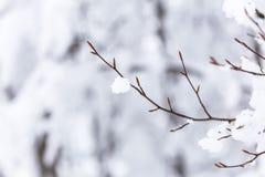 Closeupsnö på träd Royaltyfri Fotografi