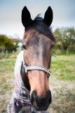Closeupstående av en lång vänd mot häst royaltyfri fotografi