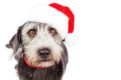 CloseupTerrier jul Santa Claus Dog royaltyfri foto