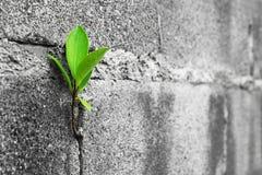 Closeupträd på tegelstenväggen Fotografering för Bildbyråer