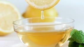 Closeupultrarapidlängd i fot räknat av honung som dryper långsamt från citronskiva i den glass kruset arkivfilmer