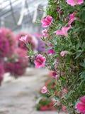 closeupväxthus Royaltyfria Bilder