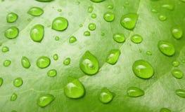 Closeupvattendroppe på det gröna bladet Arkivfoton