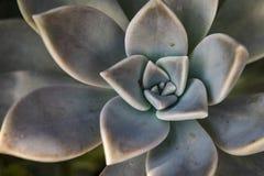 Closeupvildblommor och sommar blommar i natur royaltyfria bilder