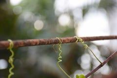 Closeupvinranka på stål Gjorda natur och man Royaltyfria Bilder