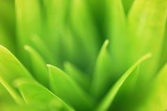 Closeupzoomsikt av naturgräsplansidor i hemträdgård på suddig grönskabakgrund royaltyfri fotografi
