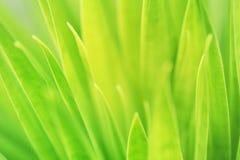 Closeupzoomsikt av naturgräsplansidor i hemträdgård på suddig grönskabakgrund royaltyfri bild