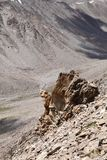 Closeview degli affioramenti della roccia fratturati del granito a KhardungLa, Ladakh Fotografia Stock