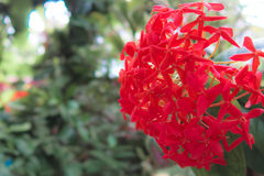 Closr-Up Red Flower. Leaf background Royalty Free Stock Photography