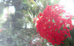 Closr-Up Red Flower. Leaf background Royalty Free Stock Photos