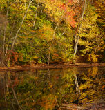 Closter Nature Center. In Closter New Jersey is a local preservation area.  Magnificent Fall colors are enhanced by the clear reflection in the pond Stock Image