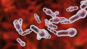 Clostridium difficile bacteriën stock footage