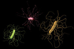 Clostridium difficile bacteria Royalty Free Stock Photography