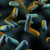 Clostridium Perfringens Bacteria Stock Images