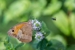 Closeup of a butterfly on a flower stock photography