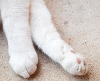 Closup cat paws. Pets care concept Stock Photography