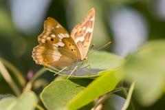 Closup de uma borboleta em uma folha imagens de stock