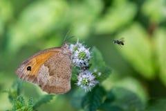 Closup di una farfalla su un fiore fotografia stock