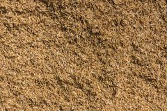 Closup of rice chaff, husks in Ranganathapur, India. Mysore, India - October 27, 2013: In Ranganathapur, closeup of a brown heap of rice chaff at an industrial Stock Image