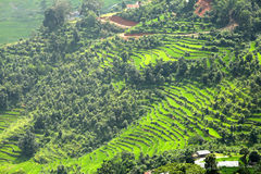 Closure look of the green terraces in Pokhara Valley Royalty Free Stock Image